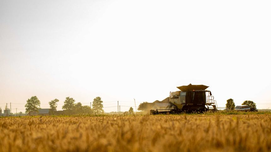 A combine harvester travels across a field, harvesting, as the sun sets.