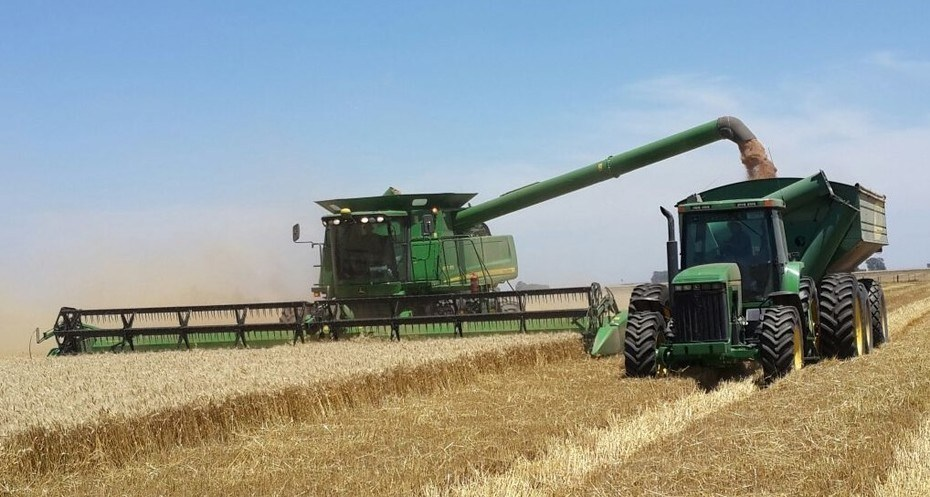 Argentina on track for a super wheat harvest | Argentine Farm News